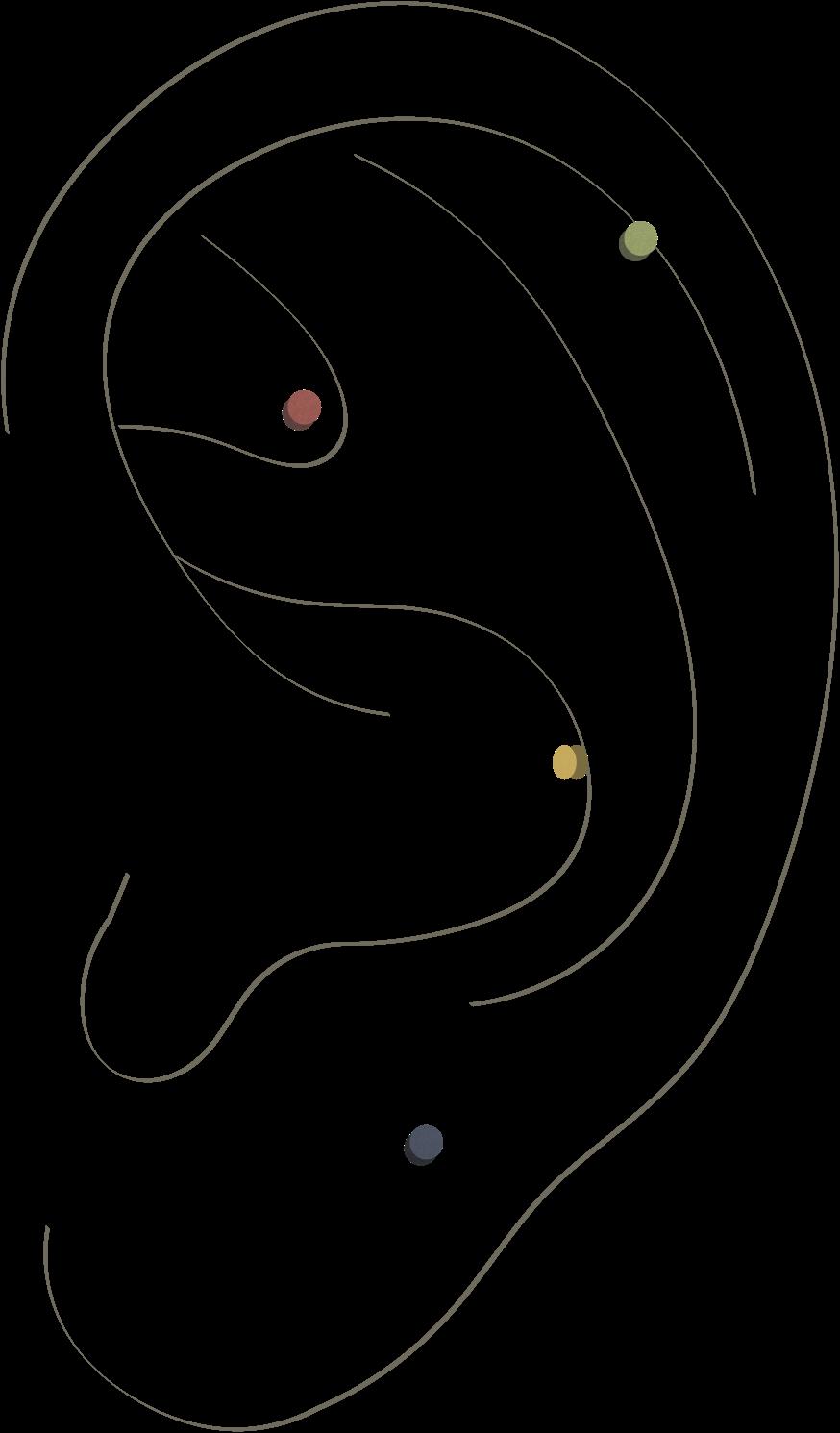 akupunkturakademiet-auriculoterapi-øreakupunktur