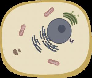 fysiologi, cellelære